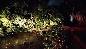 Hujan Lebat dan Angin Kencang Membuat Banyak Pohon Tumbang Di Kabupaten Mojokerto