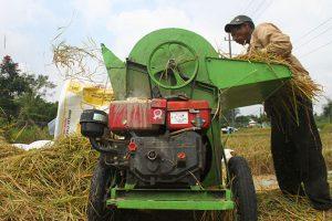 BUMD Bidang Pertanian, Hasil Panen, Anjlok